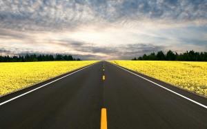 highway-through-blooms