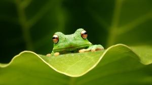 frog_leaf_grass